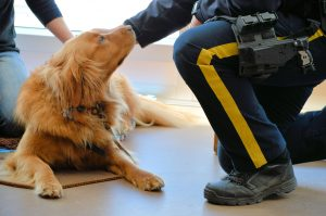 Just Published: Stress Reduction in Law Enforcement Officers and Staff through a Canine-Assisted Intervention